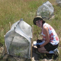Erica Kistner, biology graduate student, works in the field