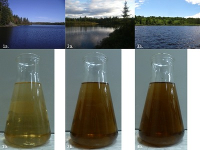 Water samples illustrating low, medium, and high DOC lake water