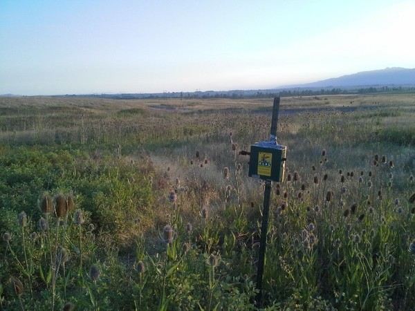 Songmeter at study site (photo by Jack McLaren)