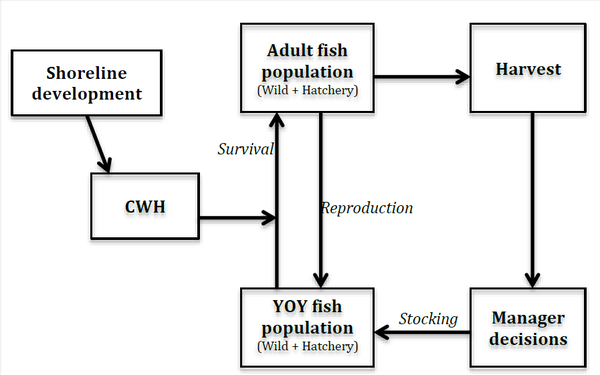 Elizabeth Golebie - Fish :ife Cycle Model