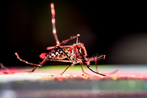 Zika infections drastically underreported during 2015 epidemic