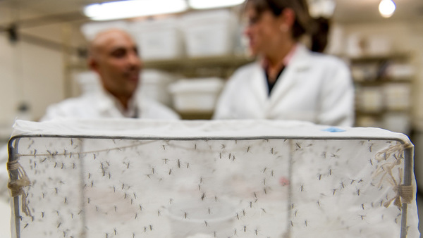 Mosquito research