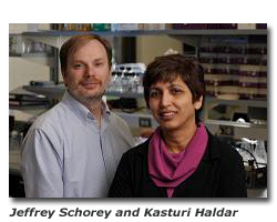 Schorey and Haldar